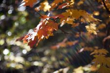 Free Autumn Leaves Stock Image - 14222301