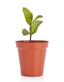 Gardening Plant Pot With Plant