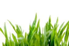 Free Close-up Green Grass Isolated Royalty Free Stock Image - 14224166