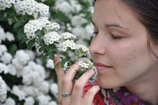 Free Young Beautiful Girl Smells White Flowers Stock Image - 14224641