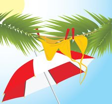 Free Swimming Suit Dries On The Branches Of Palms Stock Images - 14225984
