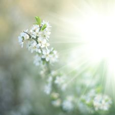 Free Sunlight Royalty Free Stock Photography - 14226157