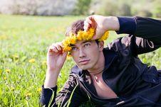 Dandelions Royalty Free Stock Photo