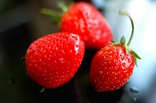 Free Strawberry Royalty Free Stock Images - 14226789