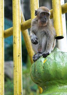 Sitting Monkey Stock Photography