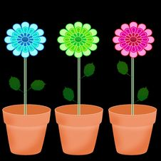 Free Colorful Flowers In Pot Royalty Free Stock Photos - 14227638