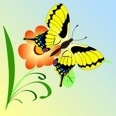 Free Butterfly On A Branch Royalty Free Stock Photo - 14227815