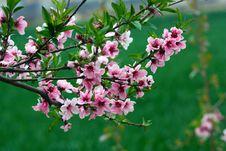 Free Spring Royalty Free Stock Image - 14228216