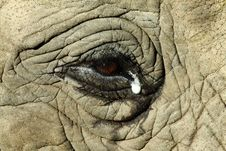 Free Elephant Eye Stock Photography - 14228222