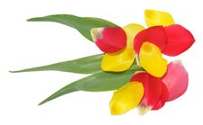 Free Petals Of Tulip As A Flower Royalty Free Stock Image - 14228956
