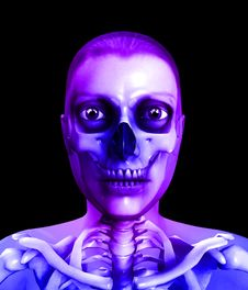 Free Skull And Flesh Royalty Free Stock Photo - 14229005