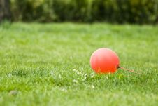 Free Red Balloon Royalty Free Stock Images - 14229699
