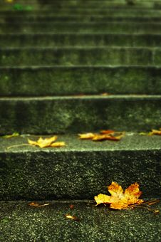 Free Autumn Leaf On Stairs Royalty Free Stock Images - 14229829