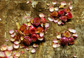 Free Dried Roses On Bark. Stock Photo - 14236690