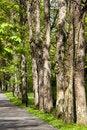 Free Paths Through The Park Stock Photos - 14238033