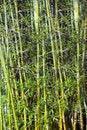 Free Bamboo Stock Photos - 14238433