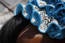 Free Dress On Top Of Horse Royalty Free Stock Images - 14230519