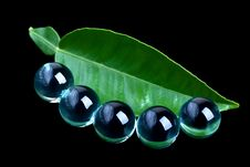 Free Green Leaf And Glass Balls Stock Images - 14230914