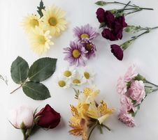 Free Fresh Cut Flowers Royalty Free Stock Images - 14231369