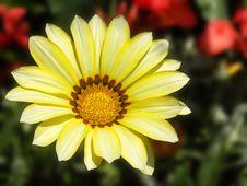 Free Yellow Flower Background Stock Photos - 14233003
