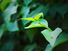 Free Young Green Leaves Stock Photos - 14233523