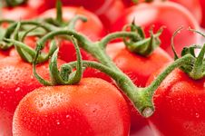 Free Fresh Tomatoes Royalty Free Stock Photos - 14233798