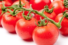Free Fresh Tomatoes Stock Images - 14233804