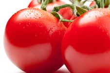 Free Fresh Tomatoes Royalty Free Stock Photography - 14233827