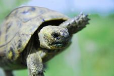 Free Turtle Stock Photo - 14234400