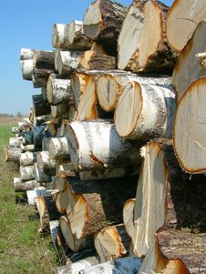 Birch Logs On A Background Of The Sky. Stock Photos