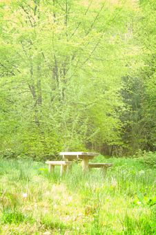 Free Bench In The Forest Royalty Free Stock Photography - 14235897
