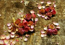 Dried Roses On Bark. Stock Photo