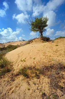 Free Lonely Tree Among The Sand Royalty Free Stock Photos - 14237218