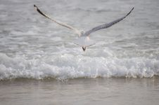 Free Seagull Flying Away From Camera Royalty Free Stock Photos - 14239388