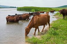 Free Pond Stock Image - 14239841