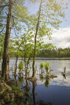 Free Evo Hiking Area, Hämeenlinna, Finland Royalty Free Stock Photography - 142358797