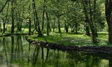 Free Green Nature Stock Photo - 142358850