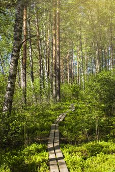 Free Tammela, Finland Stock Image - 142358951