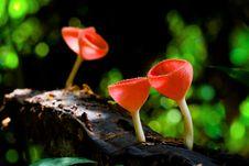 Free Mushroom Royalty Free Stock Images - 14242019