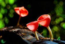 Free Mushroom Stock Images - 14242114