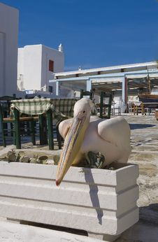Free Pelican Sitting On A Flower Bed Around The Tables Stock Image - 14242371