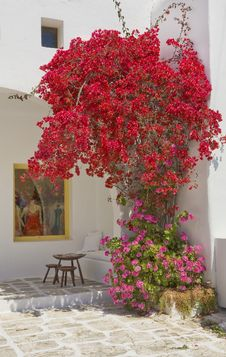 Free The Bush Flowers Around Storefront In Greece Royalty Free Stock Image - 14242436