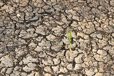 Free Single Plant Grow On A Dry Land Stock Images - 14243264
