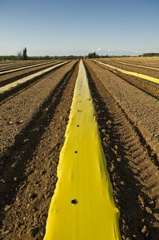 Free Plowed Field With Yellow Plastic Strip Stock Images - 14243424