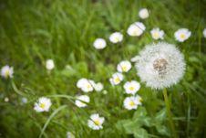 Free White Dandelion Stock Photography - 14243622