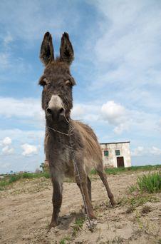 Free Happy Donkey Royalty Free Stock Image - 14244006