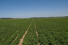 Free Raw Of Potato Field, Israel Stock Images - 14245714