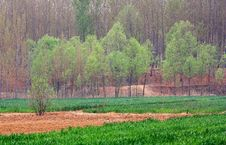 Free Spring Fields Stock Photography - 14246092