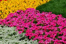Free Flowerbed Stock Image - 14246291