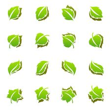Free Leaves. Elements For Design. Royalty Free Stock Photos - 14246438
